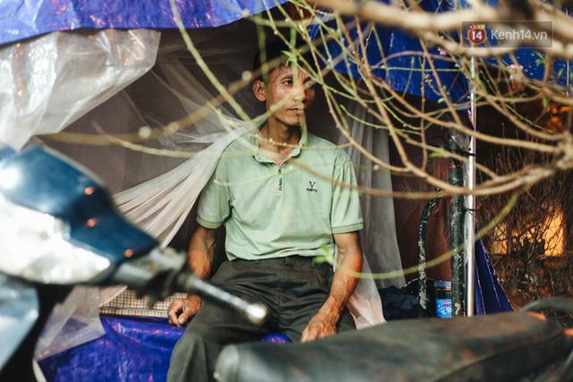 Ảnh: Dựng lều, thức trắng đêm trông đào, quất lộ thiên tại Hà Nội - Ảnh 4.