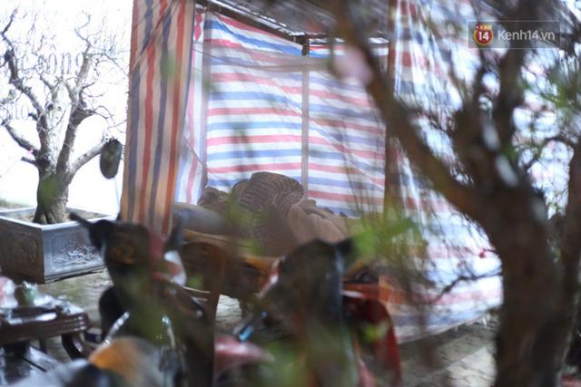 Ảnh: Dựng lều, thức trắng đêm trông đào, quất lộ thiên tại Hà Nội - Ảnh 5.