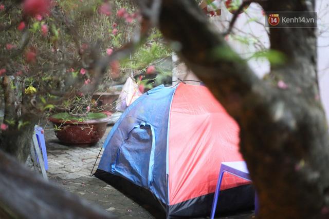 Ảnh: Dựng lều, thức trắng đêm trông đào, quất lộ thiên tại Hà Nội - Ảnh 6.