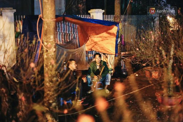 Ảnh: Dựng lều, thức trắng đêm trông đào, quất lộ thiên tại Hà Nội - Ảnh 9.