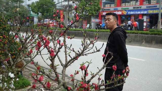 Dân buôn nhấp nhổm sợ mất Tết vì đào cảnh nở gần hết hoa, dài cổ chờ khách  - Ảnh 8.
