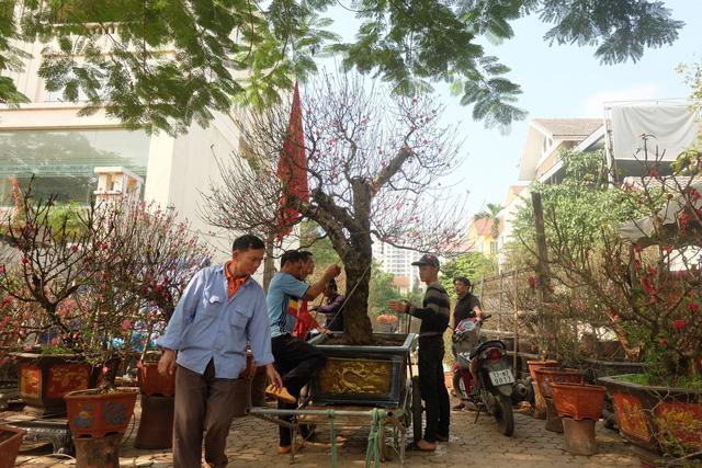 Dân buôn nhấp nhổm sợ mất Tết vì đào cảnh nở gần hết hoa, dài cổ chờ khách  - Ảnh 10.