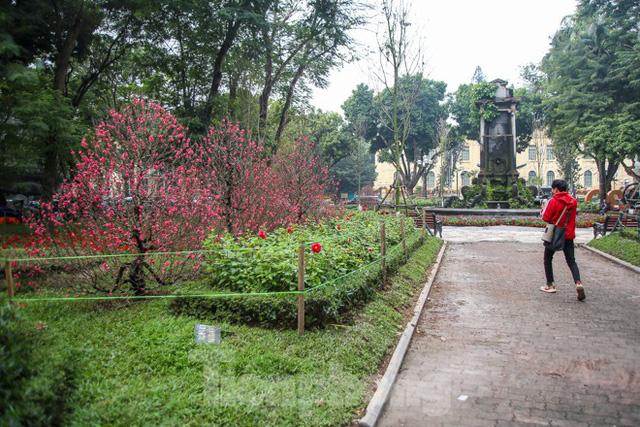 Đường phố Hà Nội trang hoàng đón Tết Canh Tý 2020  - Ảnh 8.