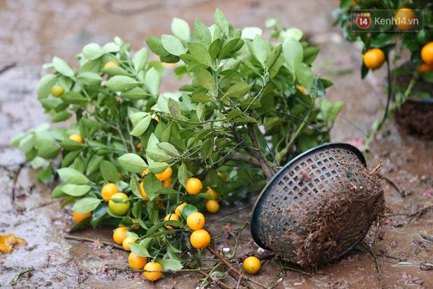 Hà Nội: Mưa gió chiều 30 Tết lại bị ép giá, người buôn đào quất quyết vặt trụi hoa quả và bỏ lại núi rác - Ảnh 11.