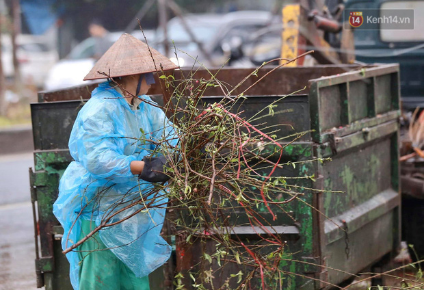 Hà Nội: Mưa gió chiều 30 Tết lại bị ép giá, người buôn đào quất quyết vặt trụi hoa quả và bỏ lại núi rác - Ảnh 8.