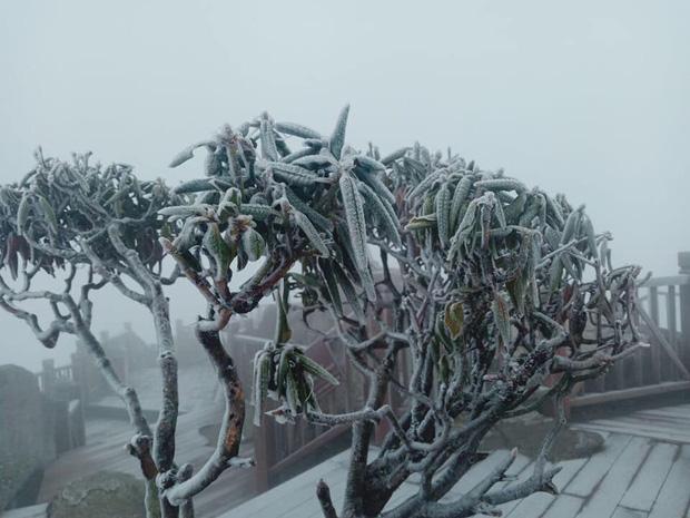 Lạnh âm độ C, đỉnh Fansipan băng tuyết phủ khắp nơi như mùa đông châu Âu ngày mùng 3 Tết - Ảnh 2.