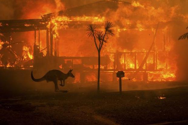 Cháy rừng ở Australia: Gần nửa tỉ động vật hoang dã bị thiêu cháy - Ảnh 1.
