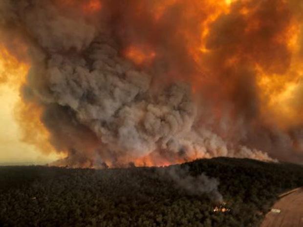 Cháy rừng ở Australia: Gần nửa tỉ động vật hoang dã bị thiêu cháy - Ảnh 2.
