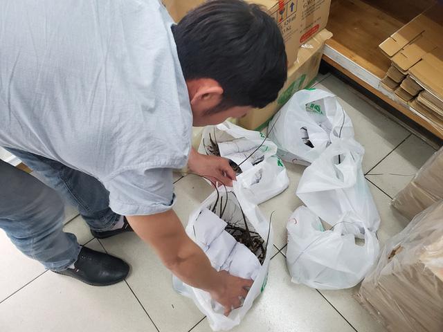 """Giải cứu tôm hùm ở Hà Nội: Hàng đồng giá 299.000 đồng/con """"cháy"""" hàng  - Ảnh 5."""