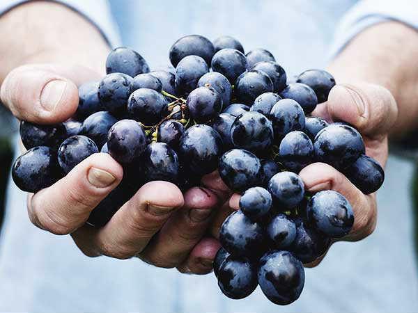 14 thực phẩm giúp ngăn ngừa ung thư hiệu quả - Ảnh 13.