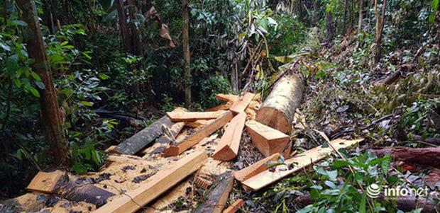 Quảng Bình: Sẽ xử lý nghiêm vụ phá rừng đệm di sản thế giới Phong Nha - Kẻ Bàng - Ảnh 1.