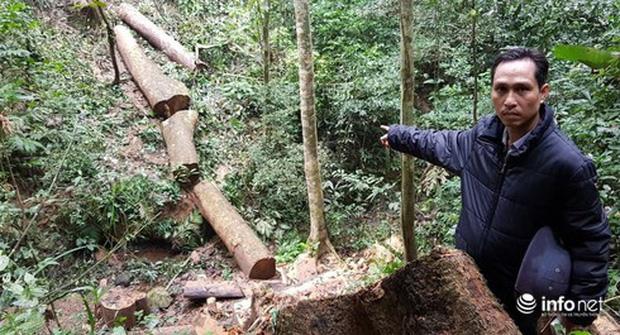 Quảng Bình: Sẽ xử lý nghiêm vụ phá rừng đệm di sản thế giới Phong Nha - Kẻ Bàng - Ảnh 2.