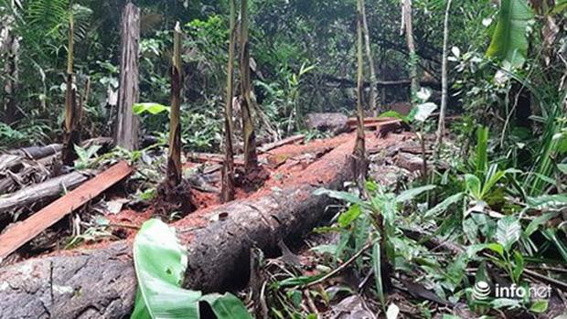 Quảng Bình: Sẽ xử lý nghiêm vụ phá rừng đệm di sản thế giới Phong Nha - Kẻ Bàng - Ảnh 3.