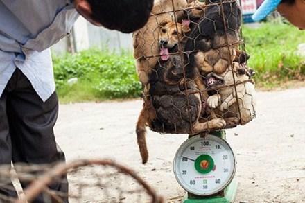 chuột-đồng, chuột-cống, bò-viên, côn-trùng, thịt-chó, đặc-sản, dân-nhậu, Campuchia, nhện-hùm