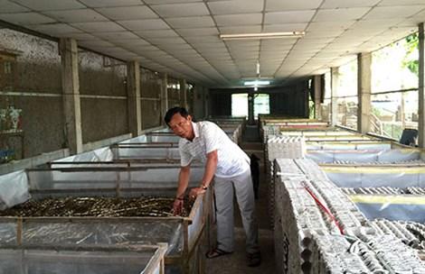 Trại dế của ông Trương Thanh Dũng ở Đức Hòa, Long An. Ảnh: QH