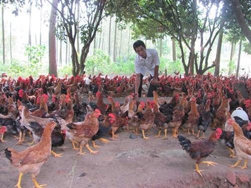 Quy mô chăn nuôi của Việt Nam chủ yếu vẫn là sản xuất nhỏ lẻ doanhnhansaigon
