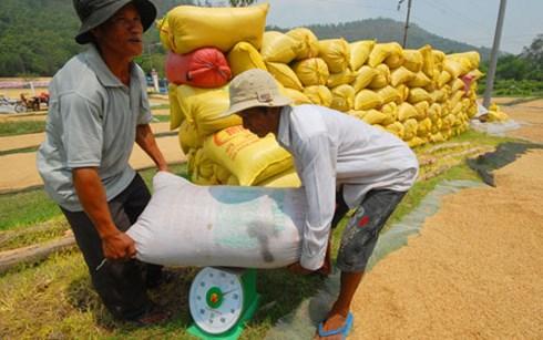 Nông dân Việt Nam làm ra nhiều lúa gạo nhưng lợi nhuận thu được chưa nhiều(Ảnh minh họa: KT)