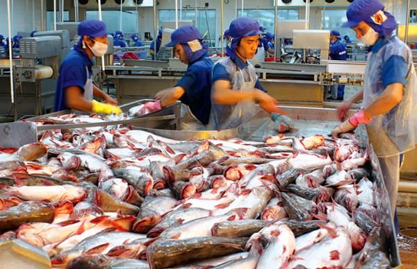 Không chỉ EU, cá tra giờ xuất khẩu sang 136 thị trường.