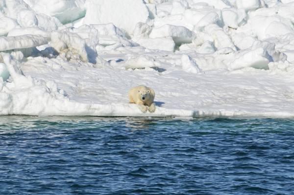 Polar-Bear-1024x678-dfb1d