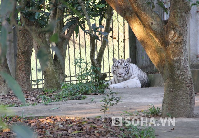 Được biết, để xây dựng nên 1 khu du lịch sinh thái với nhiều loại động vật, thú hoang dã như hiện nay, đại gia Lê Thanh Thản đã bỏ ra một khoản tiền không hề nhỏ mới có được.