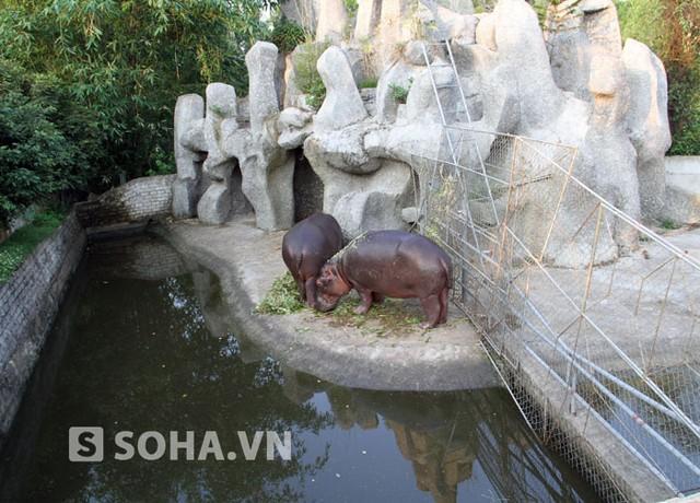 Theo thống kê của Hạt Kiểm lâm Diễn Châu, đến thời điểm hiện tại Khu du lịch sinh thái Trại Bò đang nuôi bảo tồn và sinh sản 13 loài động vật nguy cấp quý hiếm (tê giác, hổ trắng, hà mã, bò tót, sư tử…) và 7 loài động vật khác.