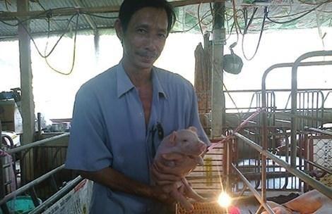 Anh Phương cho đàn lợn nghe nhạc để tăng chất lượng thịt, dễ đậu thai.