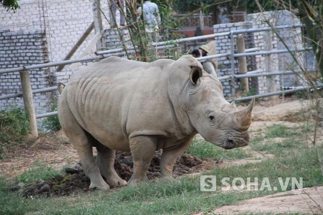 Trong đó, giá trị về mặt vật chất lẫn khoa học phải kể đến hàng đầu là 2 cá thể tê giác (1 con đực và 1 con cái ) được nhập về từ châu Cộng hòa Nam Phi năm 2008.