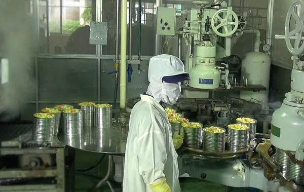 Công nhân làm việc tại dây chuyền đóng hộp của nhà máy.