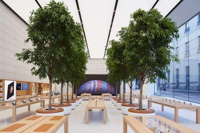 Có 8 cây xanh thật, cực lớn được đặt ở ngay giữa cửa hàng.