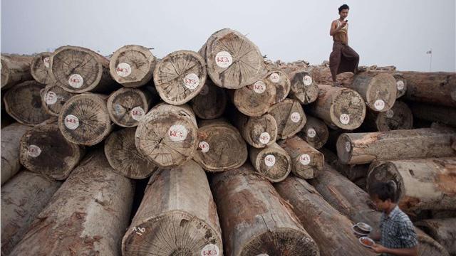 Khai thác gỗ ở Myanmar