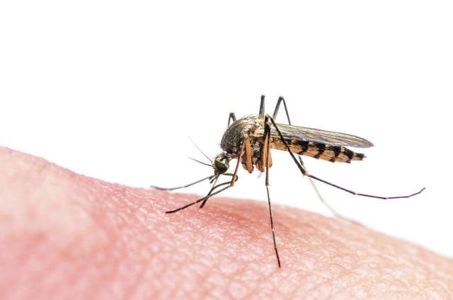 Virus Zika có thể phải chịu trách nhiệm cho các bệnh nhân ADEM