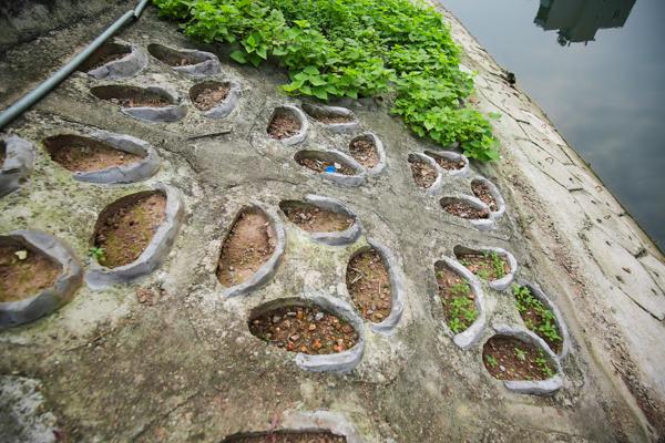 Những hộc đất nhỏ vừa được chuẩn bị xong để trồng rau bên cạnh một vườn rau xanh rờn.
