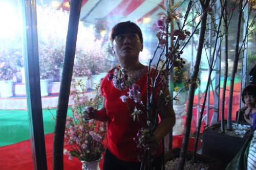 Nhiều người dân tự ý rút cành hoa anh đào mang về nhà.