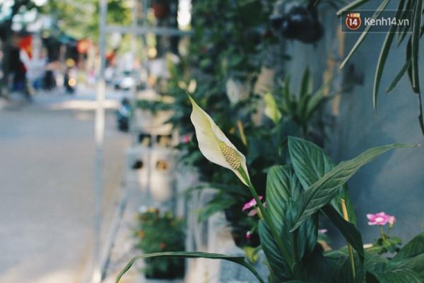 Vì thế, giữa trưa hè nóng bức nhưng hoa ở đây vẫn luôn xanh tươi.