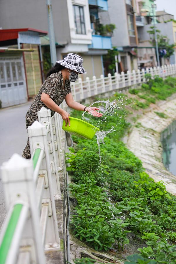 Đều đặn mỗi ngày 2 buổi, những hộ dân quanh vùng lại chăm chỉ tưới tắm cho cây và thu hoạch những mớ rau xanh về ăn.