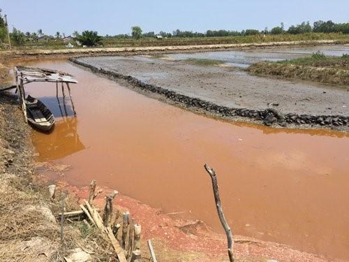 Nước nhiễm phèn nghiêm trọng tại nơi canh tác, sản xuất.