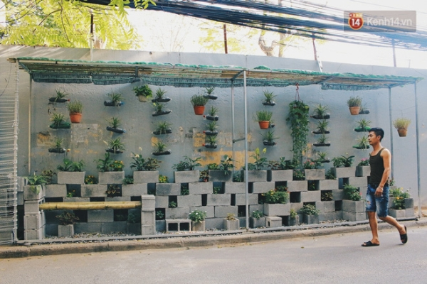 ...Giờ đây đã là một vườn hoa được thiết kế thẳng đứng, tạo thành một điểm nhấn mới lạ, được rất nhiều người dân sinh sống tại phố Trần Bình yêu thích.