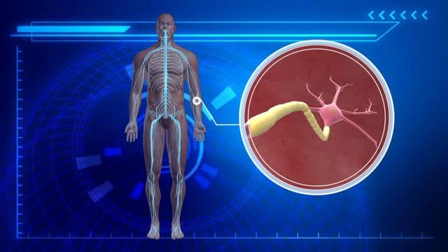 ADEM tấn công vào hệ thần kinh trung ương và gân viêm