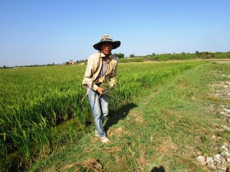 Anh Danh Quốc Dũng hằng ngày phải đi xa gần chục cây số tìm cỏ để cắt về cho bầy cừu mới đẻ.