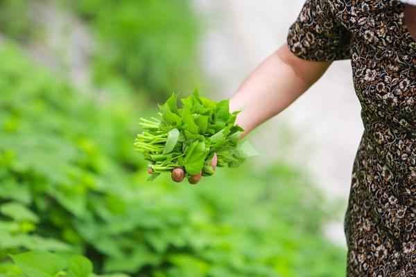 Từng hốc bê tông nhỏ ven hồ bỗng chốc trở thành những ruộng rau xanh tốt.