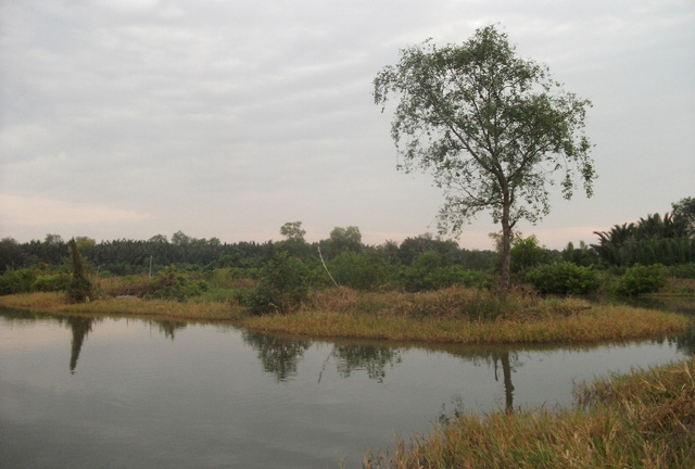 Khu vực đầu tư dự án mênh mông cỏ dại, đầm lầy...