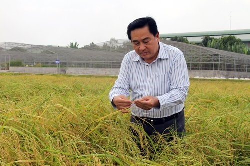 PGS.TS Dương Văn Chín cho rằng, cố đưa nước ngọt vào vùng có nguy cơ nhiễm mặn cao để trồng lúa là rất nguy hiểm.