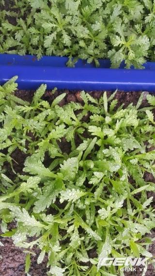 Tưới phun sương không chỉ đem lại sản lượng cao cho khu vườn mà còn là 1 biện pháp giải nhiệt cho sân thượng, ban công trong những ngày nắng nóng