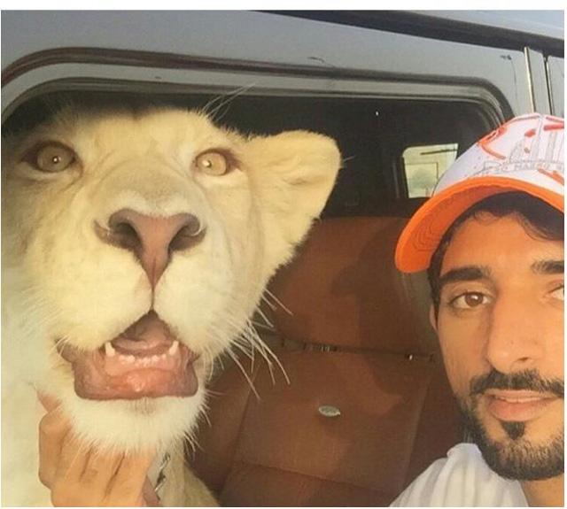 Thậm chí thuần hóa luôn cả sư tử, dù thực ra đây là hành động phi pháp