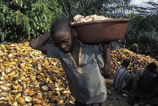 Trẻ em lao động tại trang trại ca cao Tây Phi