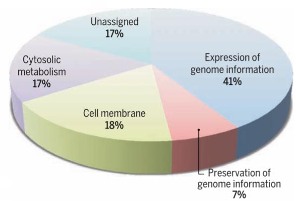 Tỷ lệ các loại gen trong bộ gen syn3.0. Trong 473 gen có 17% không có chức năng rõ ràng.