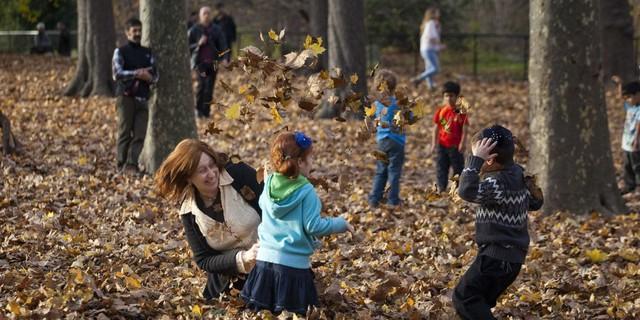 leaves autumn family