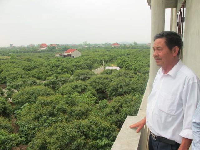 Ông Phùng Trần Hoạt (thôn Kép 1, Hồng Giang, Lục Ngạn, Bắc Giang) chỉ vườn vải sắp thu hoạch nhưng vẫn lo giá vải năm nay sẽ không được 30.000đ/kg - mức giá nhiều người dân mong đợi. Ảnh: C.V.K
