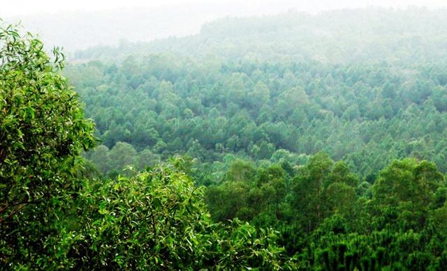 rừng nguyên sinh, trồng rừng, rừng lim, Nghệ An, thầy giáo, rừng-nguyên-sinh, trồng-rừng, rừng-lim, Nghệ-An, thầy-giáo