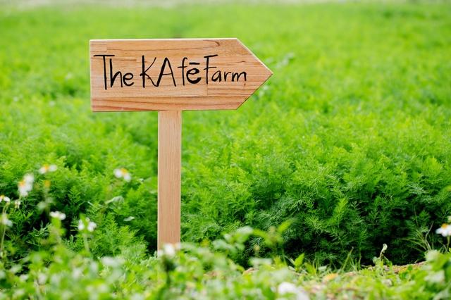 Nông trại The KafeFarm sẽ là nơi cung cấp nguyên liệu tươi sống sạch cho tất cả các sản phẩm của the Kafe